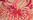 Farbepigment für Halbschalen-BH (TF14) von Aubade